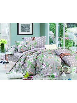 Постельное белье Shanti 2,0 сп. Amore Mio. Цвет: коричневый, зеленый, розовый