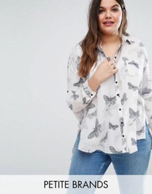 Koko Рубашка с принтом бабочек Plus. Цвет: бежевый