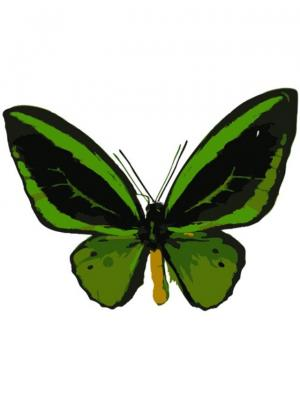 Раскраски по номерам Бабочка Орнитоптера приам Цветной. Цвет: белый