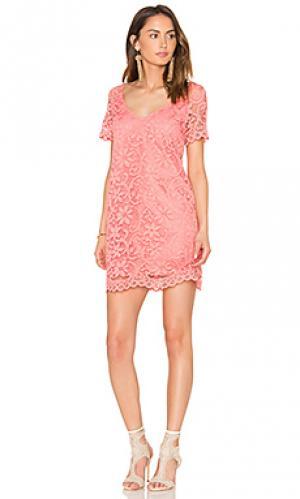 Мини платье rene BB Dakota. Цвет: розовый