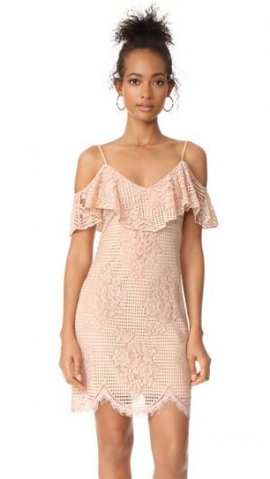 Кружевное платье Luxia с открытыми плечами и оборками WAYF. Цвет: кружево телесного цвета