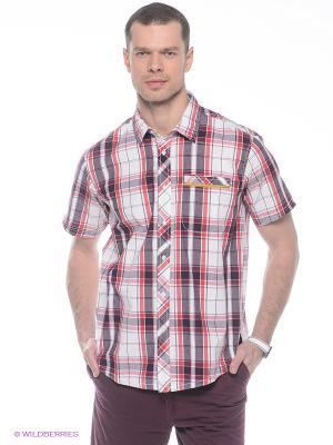 Рубашка Trespass. Цвет: красный, белый, сливовый