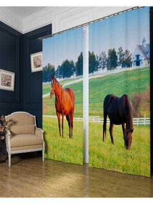Фотошторы Лошади в поле, Блэкаут Сирень. Цвет: оранжевый, серый, коричневый, голубой, красный