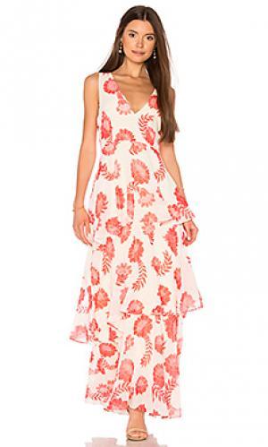 Платье gaila BB Dakota. Цвет: кремовый