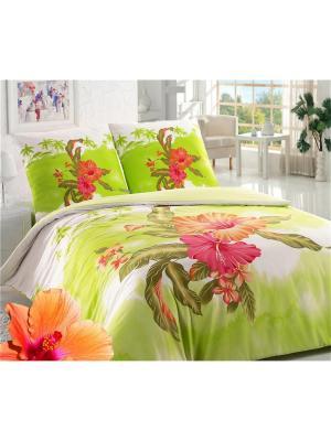 Постельное белье ЕВРО Sova and Javoronok. Цвет: белый, зеленый, розовый