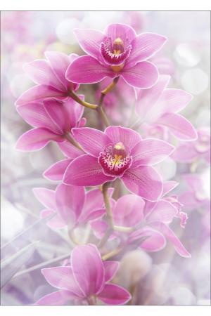 Фотообои Цветы 200х270 Chernilla. Цвет: белый, розовый