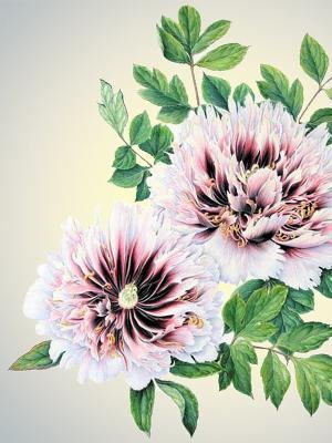 Наволочка Цветы 1 Матренин Посад. Цвет: бежевый, зеленый