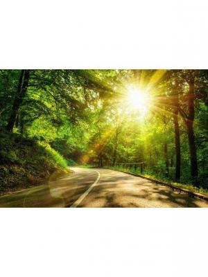 Картина лесная дорога Ecoramka. Цвет: зеленый, светло-зеленый, темно-зеленый