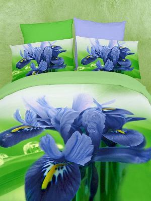 Постельное белье Buenas Noches. Цвет: зеленый, синий