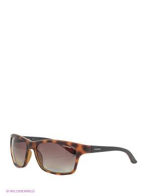 Солнцезащитные очки CARRERA. Цвет: коричневый, черный