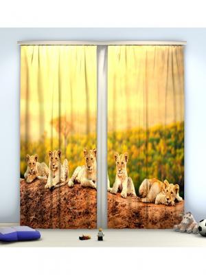 Фотошторы Тигрята Сирень. Цвет: оранжевый, зеленый, коричневый