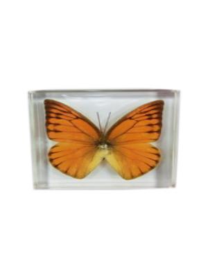 В Мире Насекомых Бабочки Оранжевый Альбатрос Склад Уникальных Товаров. Цвет: прозрачный