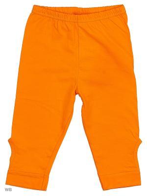 Леггинсы Хох. Цвет: оранжевый