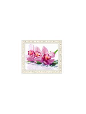 Розовая орхидея В1153 Картина в раме 30х40 PROFFI. Цвет: белый, зеленый, розовый