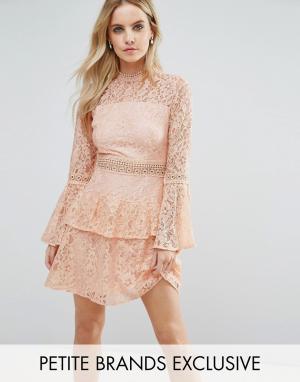 John Zack Petite Ярусное кружевное платье мини для выпускного премиум-класса. Цвет: розовый