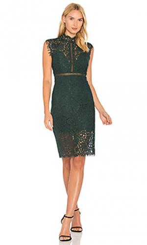 Платье с кружевной вставкой Bardot. Цвет: зеленый