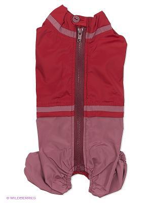 Дождевик холодный (Такса карликовая), девочка ТУЗИК. Цвет: бордовый