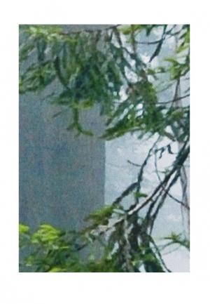 Комплект фотоштор ТОМДОМ. Цвет: зеленый