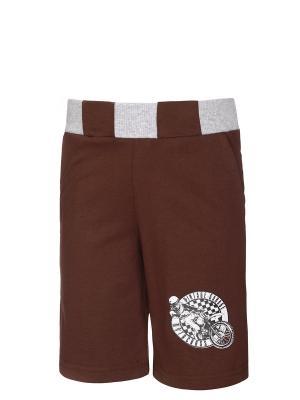 Бриджи M&DCollection. Цвет: коричневый