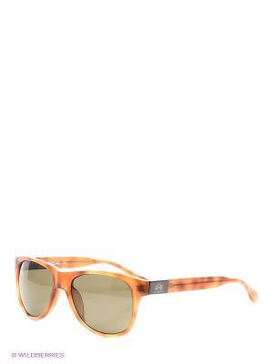 Солнцезащитные очки LM 529 06 La Martina. Цвет: коричневый