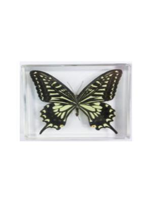 В Мире Насекомых Бабочки Swallowtail Склад Уникальных Товаров. Цвет: прозрачный