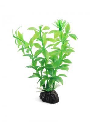Растение аквариумное Гемиантус 100мм зеленый. LAGUNA. Цвет: зеленый