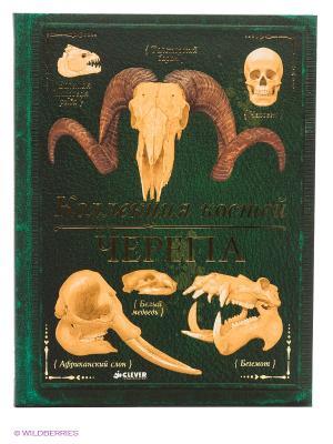 Коллекция костей. Черепа Издательство CLEVER. Цвет: зеленый