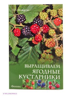 Выращиваем ягодные кустарники Феникс. Цвет: зеленый