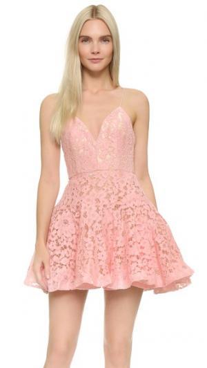 Мини-платье Leisa Alex Perry. Цвет: леденец