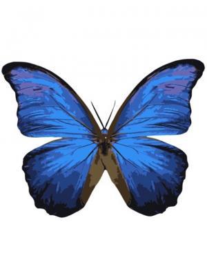 Раскраски по номерам Бабочка Морфо Менелай Цветной. Цвет: белый
