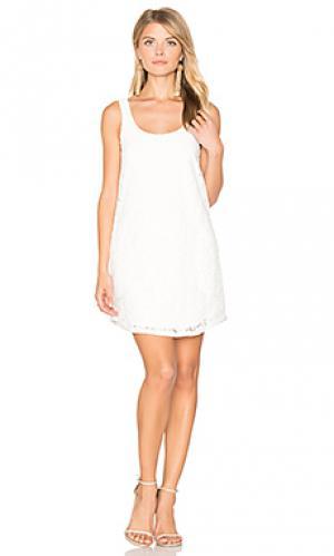 Кружевное мини-платье BLAQUE LABEL. Цвет: белый