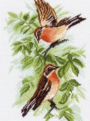 Рисунок на канве Луговой чекан Матренин Посад. Цвет: зеленый, коричневый