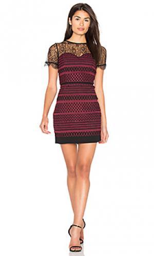 Кружевное платье heidi Greylin. Цвет: красное вино