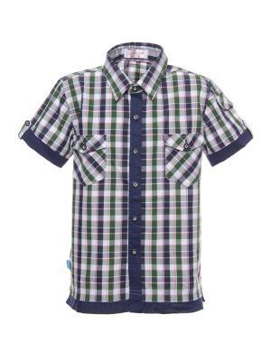 Рубашка DAMY-M. Цвет: синий, зеленый