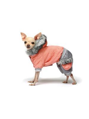 Комбинезон для собак Ай Да Пес. Цвет: персиковый