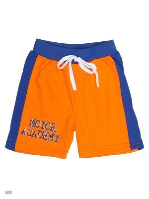Шорты MIKIVIKI. Цвет: оранжевый, синий