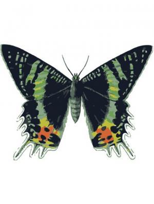 Раскраски по номерам Бабочка Урания мадагаскарская Цветной. Цвет: белый