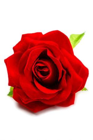 Заколка и ободок в подарок TELLE QUELLE. Цвет: красный