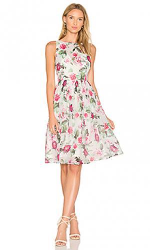 Платье dehlia BB Dakota. Цвет: белый