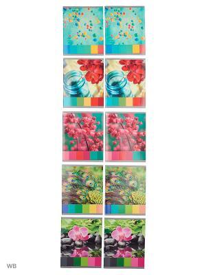 Комплект тетрадей 48 листов, 10 штук, 5 дизайнов. Игра красок Канц-Эксмо. Цвет: белый