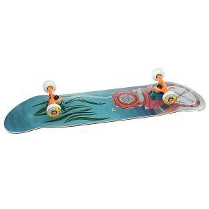 Скейтборд в сборе  Водолаз Multi/Color Trucks 32 x 8.125 (20.6 см) Nord. Цвет: мультиколор
