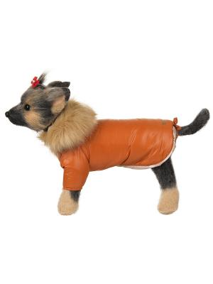 Куртка Winter DOGMODA. Цвет: оранжевый