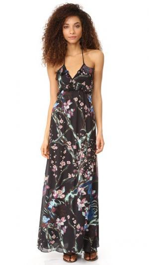 Платье Sophie Jill Stuart. Цвет: принт в виде птиц
